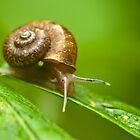 snail by davvi