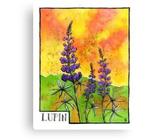 Lupin Flowers Canvas Print