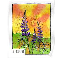 Lupin Flowers Poster