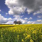 Yellow  by Nigel Bangert