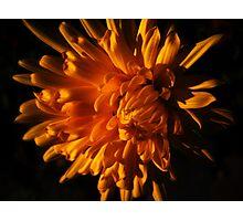 Autumn Flower Photographic Print