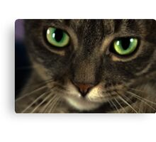 Cat with eyes Canvas Print