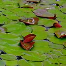Green Water Lillies by Lotus0104
