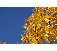 Bright Yellow Autumn Photographic Print