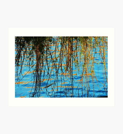 Weeping Willow reflected onto the water Art Print