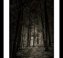 Alternative Forest III by hankfrentzphoto