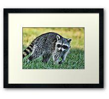 Raccoon Buddy Framed Print