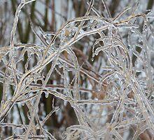 Toronto Ice Storm 2013 - Pale Frozen Grasses  by Georgia Mizuleva