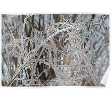 Toronto Ice Storm 2013 - Pale Frozen Grasses  Poster