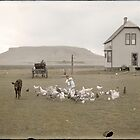 Little girl feeding chickens, Montana. by PhotoRetrofit