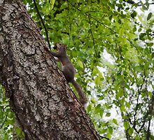 A squirrel and his nut by Scott Mitchell