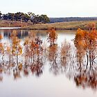 Eppalock Autumn by Harry Oldmeadow