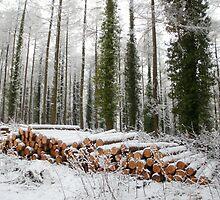 Winter fuel by missmoneypenny