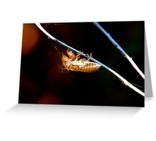 Cicada Exuvia. Marrickville N.S.W. Greeting Card