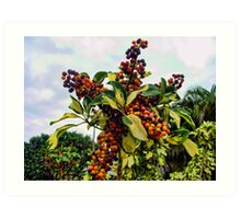 Ripening into the Maroon Nineteen Art Print