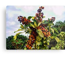Ripening into the Maroon Nineteen Metal Print