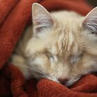 Gumbo in Blanket by wee3beasties