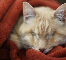 Gumbo in Blanket by wee3beasties