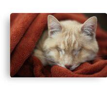 Gumbo in Blanket Canvas Print