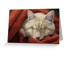 Gumbo in Blanket Greeting Card