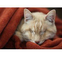 Gumbo in Blanket Photographic Print