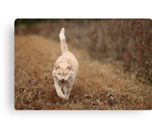 Gumbo on Brown Grass Canvas Print