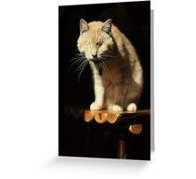 Gumbo on Stool Greeting Card