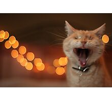 Wide-Mouthed Gumbo Photographic Print