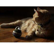 Gumbo by Catnip Ball Photographic Print