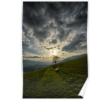 Lonely tree against sunset meadow in the Alps color photo wall art - Il primo Albero Poster