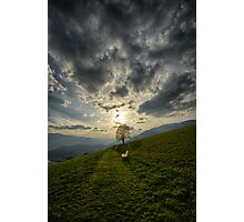 Lonely tree against sunset meadow in the Alps color photo wall art - Il primo Albero Photographic Print