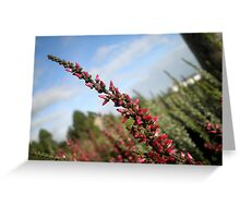 Irish Heather Greeting Card