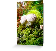 Magic Irish Mushrooms Greeting Card