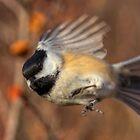 Chickadee Blurrrr... by JamesA1