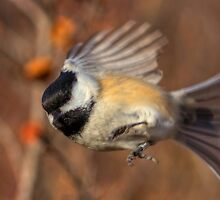 Chickadee Blurrrr... by JamesA1