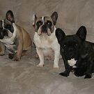 Three Frenchies And A Couch by v-something