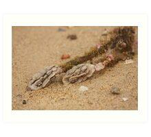 Alien Brains - Beachcomber Series Art Print