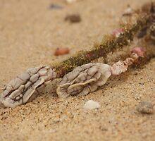 Alien Brains - Beachcomber Series by reflector