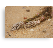 Alien Brains - Beachcomber Series Canvas Print