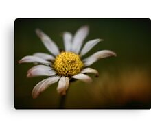Bruised Beauty.... Canvas Print