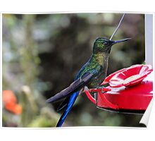 Blue-Mantled Thornbill In Mindo Poster