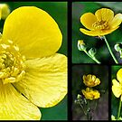 Buttercup Collage by Sheri Nye