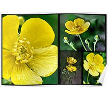 Buttercup Collage Poster