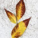 December Fallen Leaves by heatherfriedman