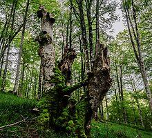 Tree shape by Tilyo Rusev