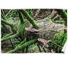 Wooden mushroom Poster