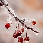 Frozen Crab-apples by Robert Kelch, M.D.