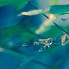 Green Elegance by malenaromano