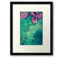 Bougainvillea Plant  Framed Print
