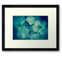 Shining Leaves  Framed Print